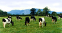 Dairy Farm Equity Shares