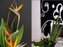 Texas Rose Florist Auckland
